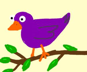 purple bird on a branch