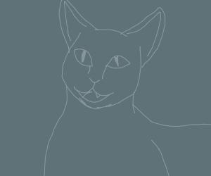 a happy gray cat