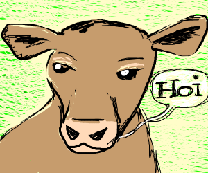 "Brown calf says ""Hoi!"""