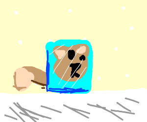 A cat in an ice cube (also it's snowing)