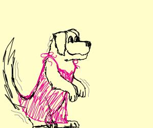 dog dancing in a dress