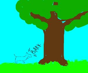 Invisible dog barks at tree
