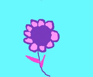 A nice, purply purple flower