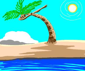 Dabbing palm tree