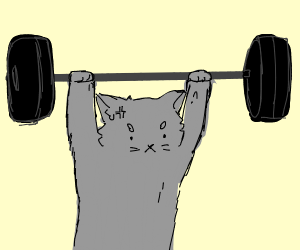 A cat lifting weights
