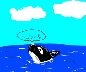 Orca Dog
