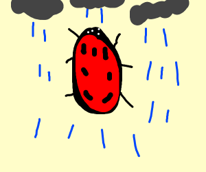 lady bug in a storm