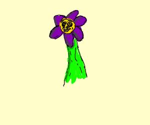 Purple derpy flowey