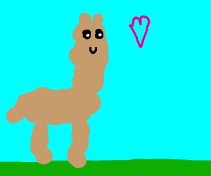 A llama loves you.