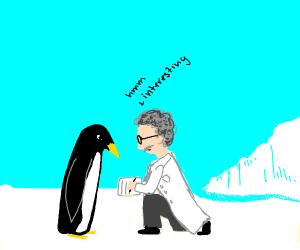 Penguin scientist