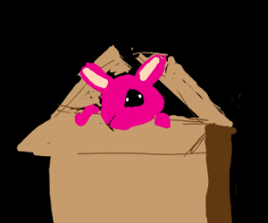 Pink bunny in a box