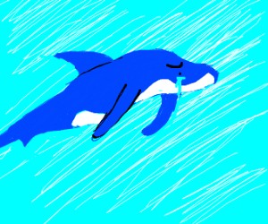crying dolphin