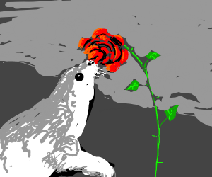 Young Seal got a kiss from a rose