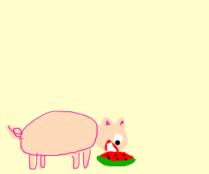 Pig eating watermelon slice