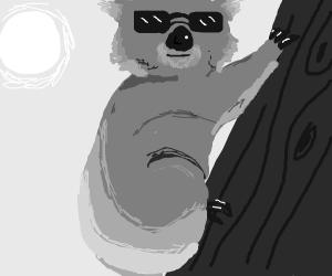 Koala with sunglasses. He's a cool dude