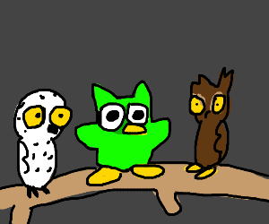 duolingo owl with hedwig and a brown owl