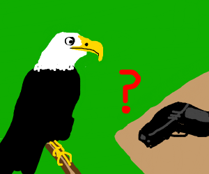 Eagle find a gun; is confused