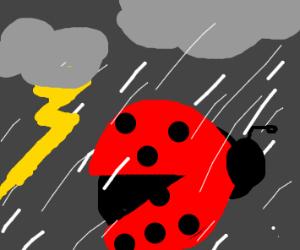 a ladybug gets rained on