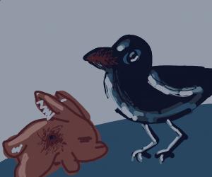 bunny killed by crow