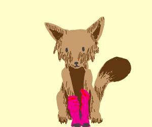 Fox with pink socks :-)