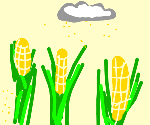 Corn in a Dust Storm