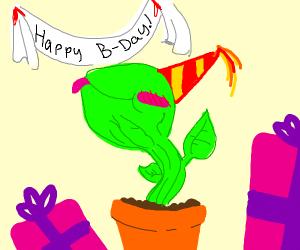 happy birthday weird plant!