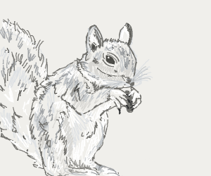 a squirell