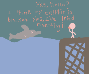 my dolphin isn't working