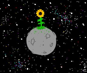 sunflower on the moon