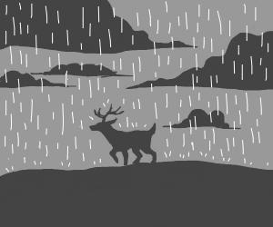 Deer in the rain