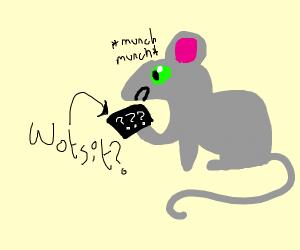 mouse eating a wotsit