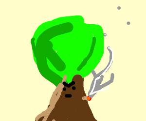 Tree smoking weed