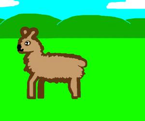 brown llama
