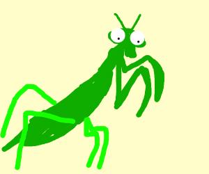 Unconventional Praying Mantis