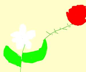 Jasmine is holding a flower