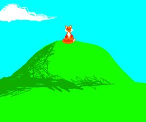 A fox on a hill.