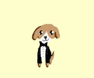 Tuxedo Dog