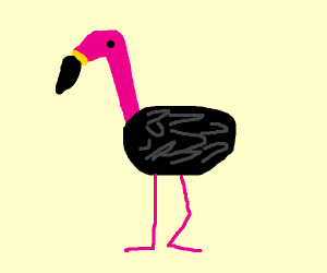 Black-feathered flamingo
