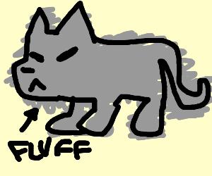 fluffy wolf