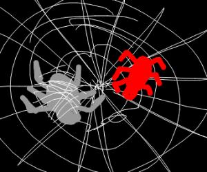 Stuck in spider-web