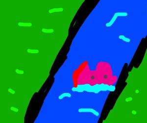Pig.  Crossing.  River
