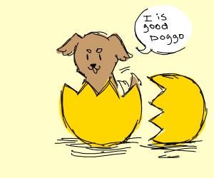 Good doggo hatches from an egg