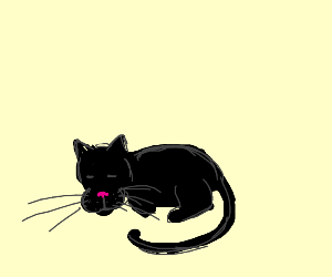 Sleeping black cat
