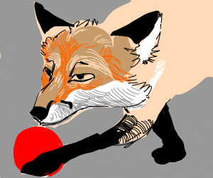 Fox holding red ball