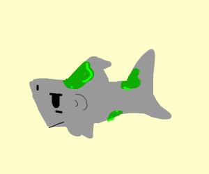 Moldy Shark