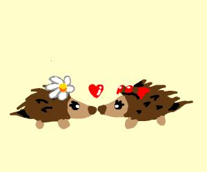 Two girl hedgehogs in love