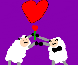 Sheep love