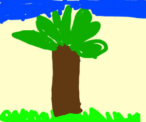 palm trees on grass