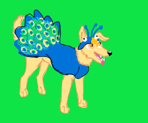 Dog in peacock costume (quite the good boy)