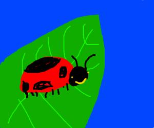 Ladybug on leaf smiling